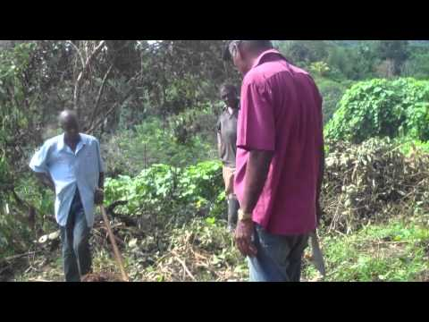 CBA Jamaica: UN Volunteers on Climate Change Issues in Glengoffe (UNV Video)