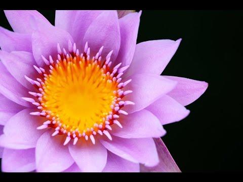 Reiki Healing Music: 1 Hour Zen Music, Chakra Cleanse, Meditation Music, Sleep Music, Calming ☯199