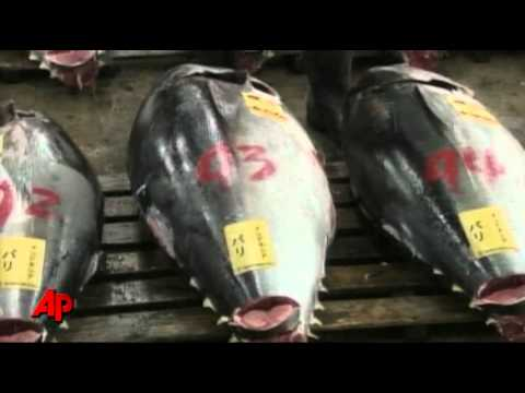 Giant Tuna Sells for $396,000 at Auction