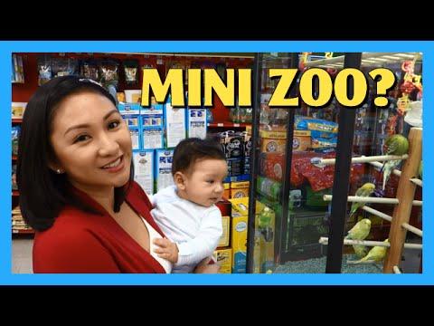 Mini Zoo?