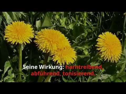 Schwanger Werden: Die 10 Besten Kräuter/Heilpflanzen