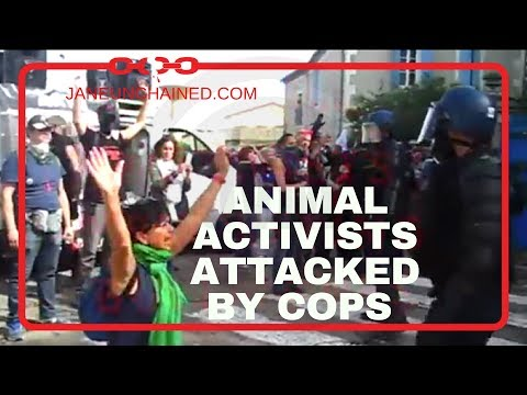 Animal Activists Attacked by Cops as They Protest Bullfight in France!