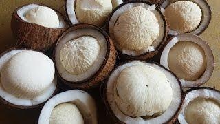 Tasting Coconut Flower in My Village - Healthy Natural Food