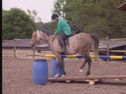 Reiten nach TTeam Methode, Linda Tellington-Jones, pferdia