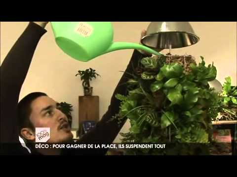 Escuchar musica gratis ccoli com musica online - Tableau vegetal jardiland ...