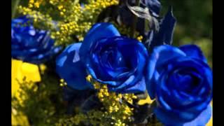 Watch Pam Tillis Blue Rose Is video