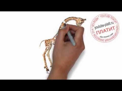 Как нарисовать пятнистого