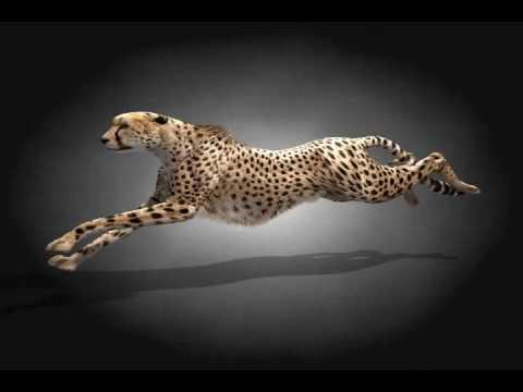 Cheetah running animation