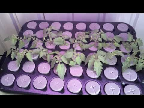 Australian Indoor Grow Room   Hydroponics With House And Garden Nutrients