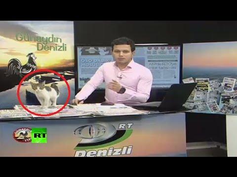 Una gata aparece en un canal de TV durante un programa de noticias en directo.
