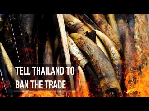 Petition to ban Thai ivory trade and save Africa's elephants | WWF