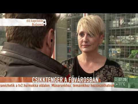 Csikkhalmokkal vannak tele a fővárosi buszmegállók - tv2.hu/mokka