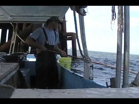 COMMERCIAL FISHING FOR BLUE RUNNERS WITH A CANE POLE
