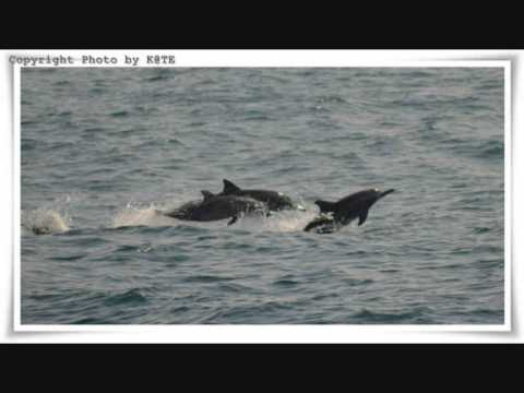 Blue Whale & Dolphin  Mirissa, Sri Lanka video