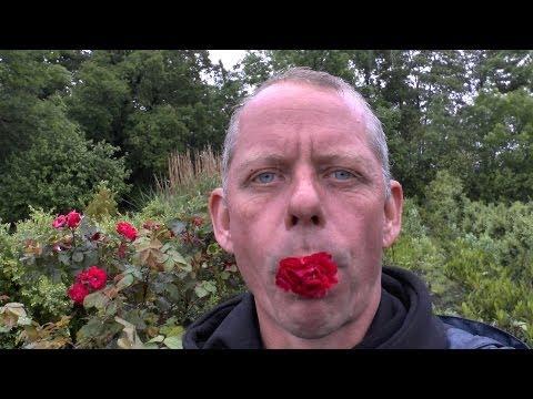 Rosenstecklinge - Steckholz - Rosenvermehrung - Anleitung