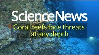 Coral reefs face threats at any depth | Science News