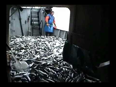 Pesca de caballa