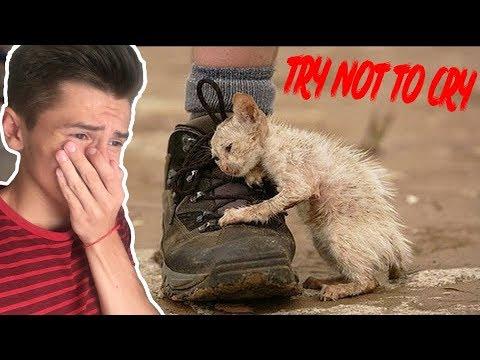 Уродливый кот #2 | ПОПРОБУЙ НЕ ЗАПЛАКАТЬ | TRY NOT TO CRY