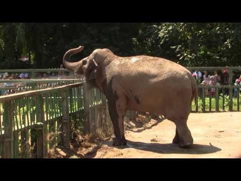 Зоопарк, Майк Науменко - Фрагмент