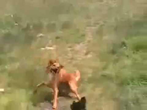 Anjing Ajaib