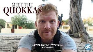 Meet the Quokkas