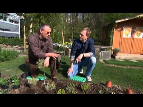Kräuterbeet Richtig Bepflanzen