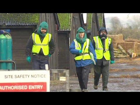 British bird flu confirmed as H5N8