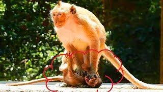 Omg! Aww! What's Stupid Monkey Doing On Poor Baby Monkey! Break My Feeling!