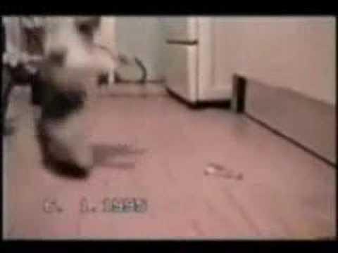 Позитивная подборка с кошками