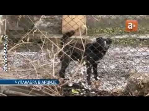 Чупакабра напала на жителя Одесской области