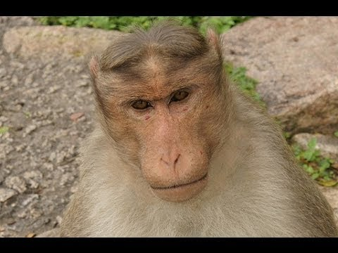 10 Amazing Facts About Monkeys & Apes