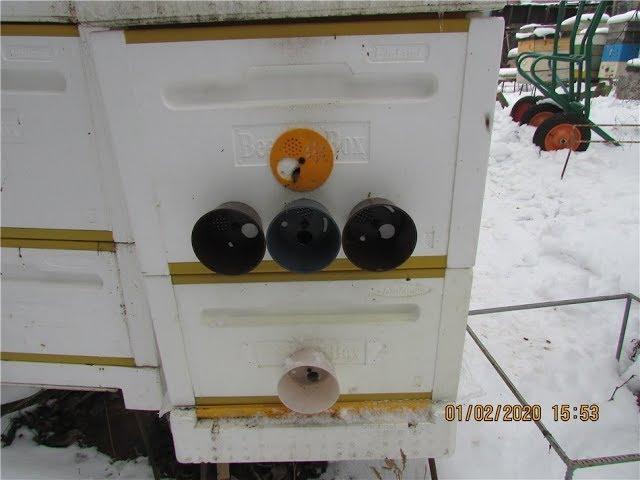 зимовка пчел на воле в ульях ППС ( финский улей ) и теплая зима 2020 года