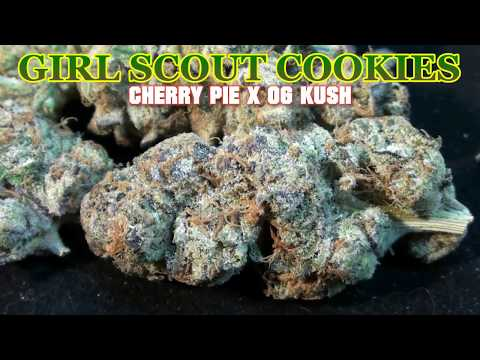 Girl Scout Cookies - Medical Marijuana Strain Review