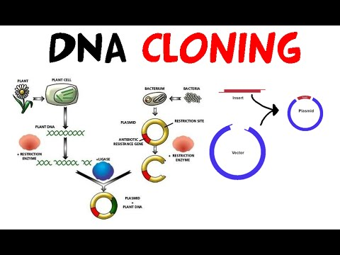 Dna Cloning.mp4 video