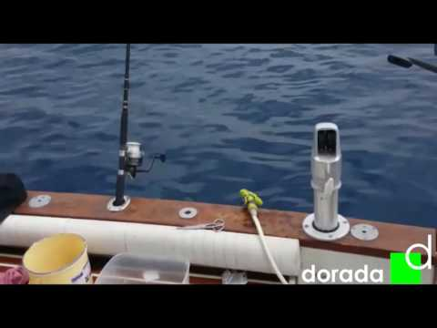 ловля скумбрии в испании