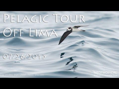 Pelagic Tour off Lima 07/26/2015