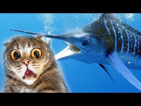 КОТЕНОК РЫБОЛОВ В поисках РЫБЫ МЕЧ симулятор маленького котенка рыболова детский летсплей от #фгтв