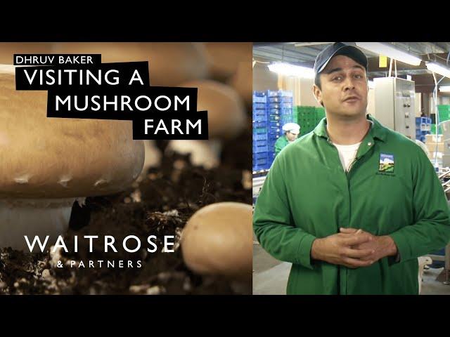 Dhruv Baker visits a mushroom farm - Waitrose