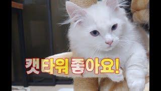 고양이 캣타워에서 노는 똥꼬발랄한 모습!(no talking) Playing in the cattower. キャットタワーで遊ぶ猫の映像