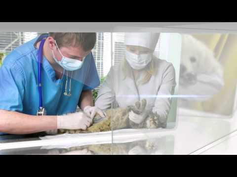 Vídeo Comercial - Health For Pet