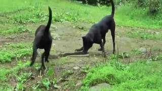 SNAKE FIGHTS VERSUS DOGS GONE WRONG!!