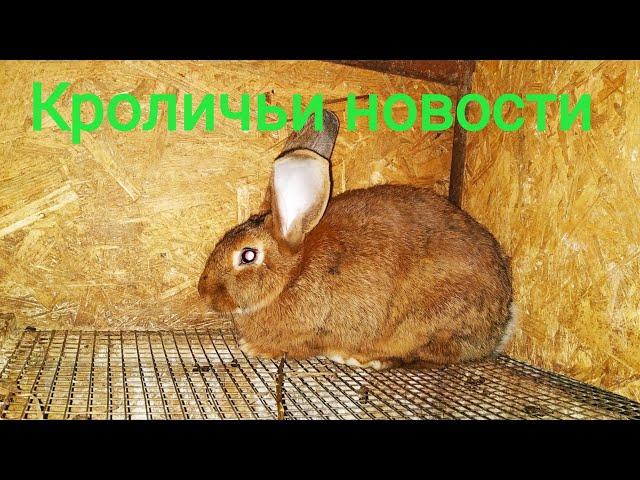 Вечерние Кроличьи  новости //Жизнь в деревне !!!