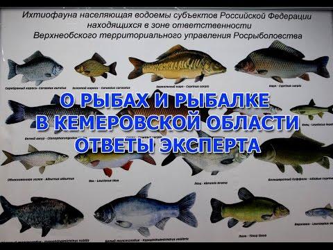 кемеровская рыбалка на ине