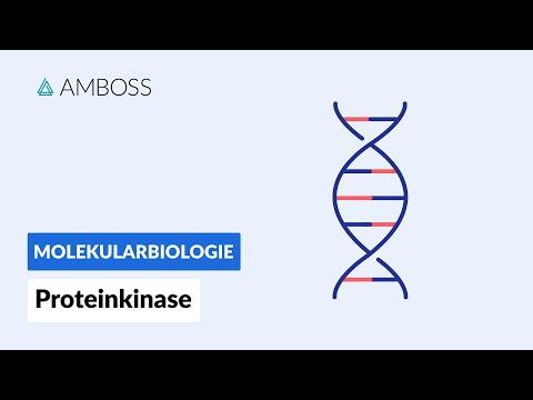 Proteinkinasen - Biochemie - AMBOSS Video