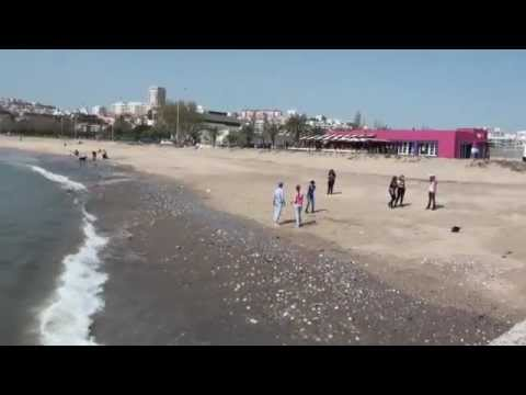 PRAIA DE LISBOA. ALG�S. - DOMINGOS SILVA VIDEOS. 4140