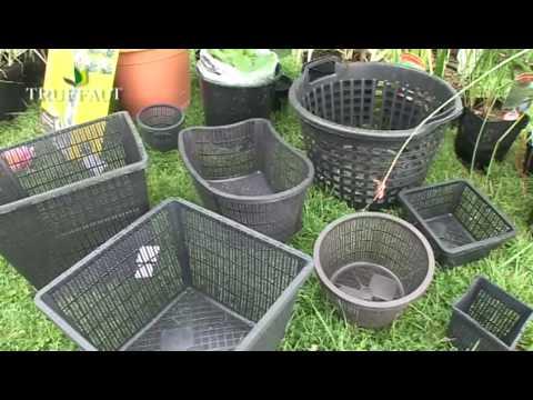 Structurer son bassin avec des plantes aquatiques youtube for Toile bassin