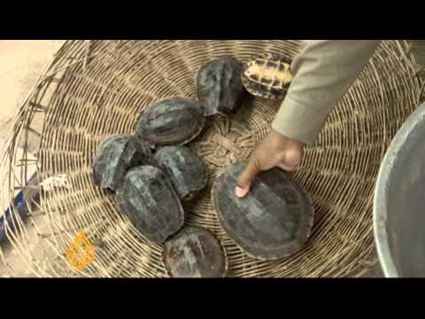 Cambodia moves to combat wildlife trafficking