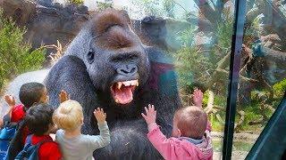 Animaux drôles ATTAQUANT des enfants dans la compilation de zoo