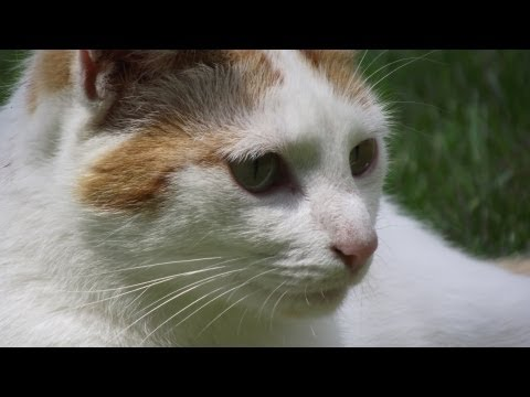 Purring Cat Soothing Peaceful Relaxing Healing Sound Stress Relief