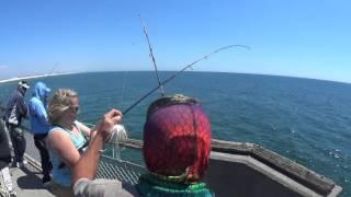 Okaloosa Island Pier Cobia Fishing - Spring  2016